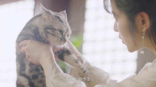Be My Cat